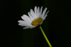 pilt_19